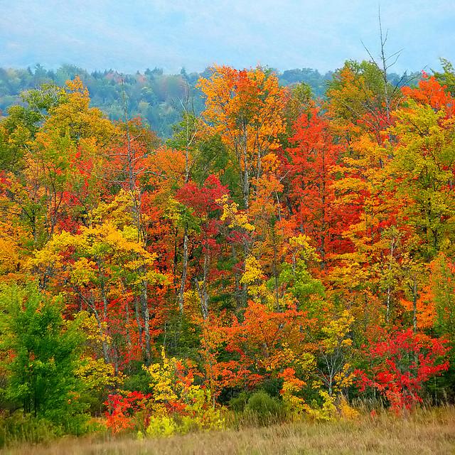 Vermont foliage 1425557604_b18c1c3fde_z
