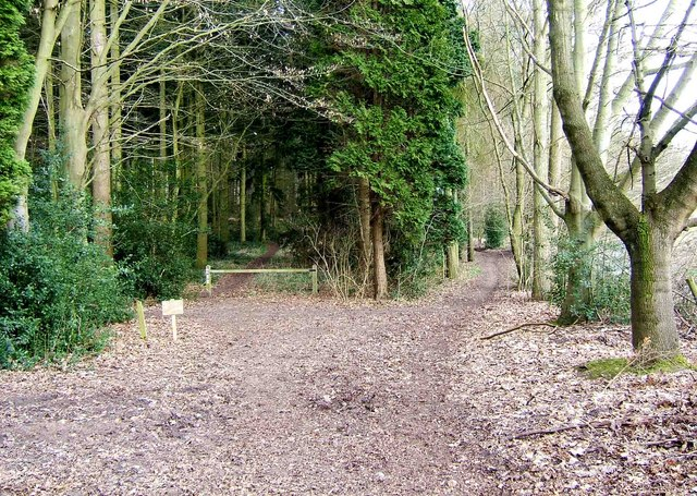 Two_paths_into_Kingsford_Forest_Park_-_geograph.org.uk_-_1185904