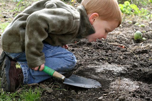 digging_4025946850_211dc931b9_b