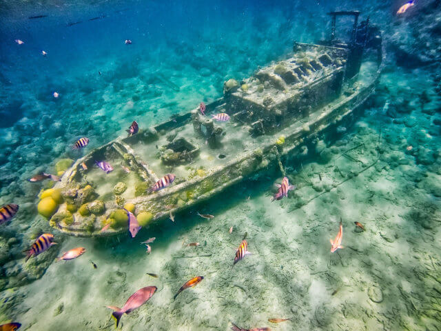 ignoring sunk costs